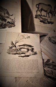 Read more about the article Un esempio di divulgazione scientifica tramite stampa nella Bologna del XVIIIsec.