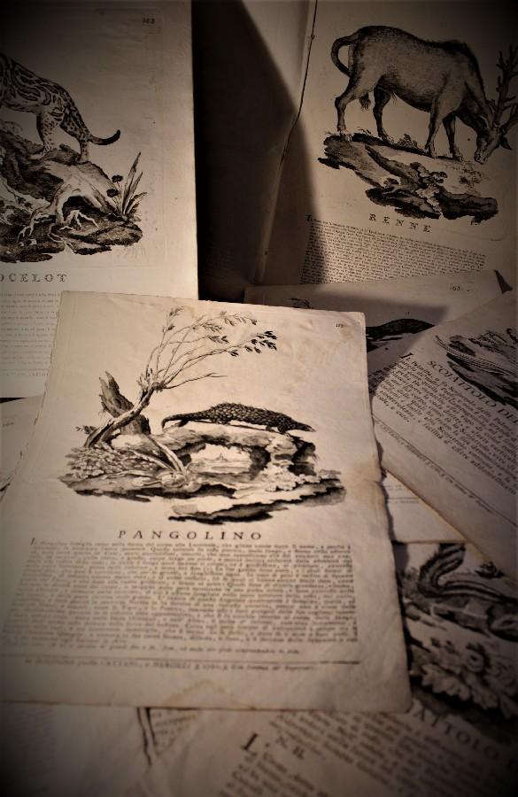 You are currently viewing Un esempio di divulgazione scientifica tramite stampa nella Bologna del XVIIIsec.
